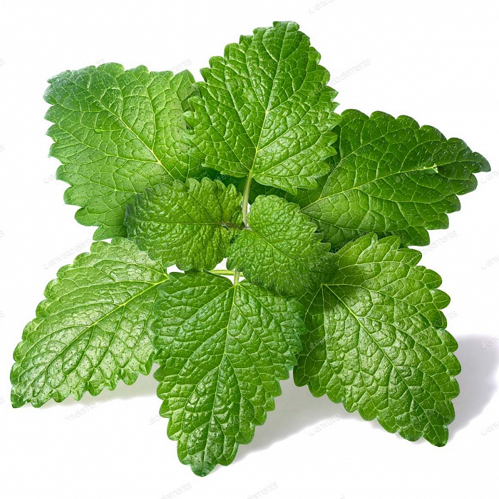 melissa-essential-oil-lemon-balm-essential-oil-melissa-officinalis-productpic_1590304563.jpg