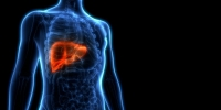 The Link Between Viruses & The Liver
